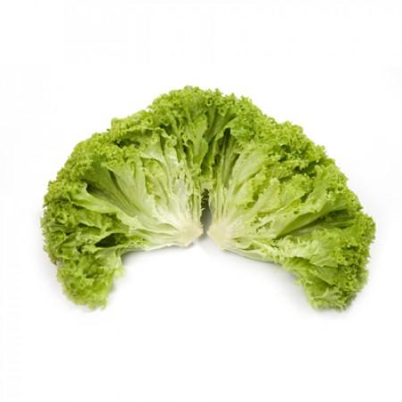 کاهو فرانسوی سبز