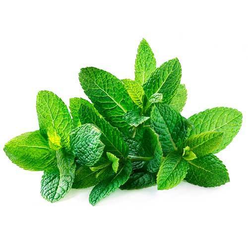 داروی گیاهی برای درمان دردهای عصبی